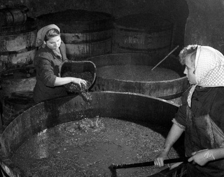 Az aszu feldolgozása a présházban. Tarcal, 1957.