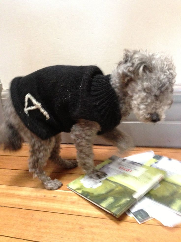 Stomping on his advance copies of the book. And wearing his little hand knitted jumper. Knitted by a friend.