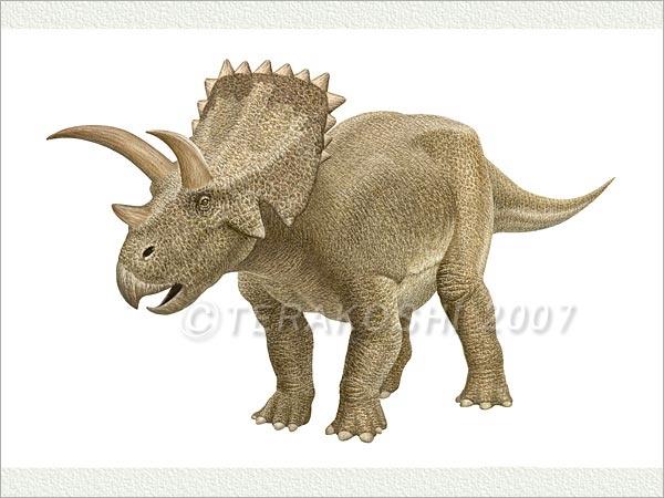 Arrhinoceratops   Dinosaur Heaven   Pinterest  Arrhinoceratops...