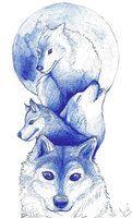Lobos by isidoraaguayo