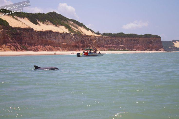 Baía dos Golfinhos: caminhando para o norte é a primeira praia após o centro. Como o nome diz, é o lugar perfeito para ver golfinhos que passeiam pelas águas calmas da baía, junto com os caiaques e praticantes de stand up paddle.  Leia mais: http://viajandocomeles.com.br/o-que-fazer-praia-pipa-natal/