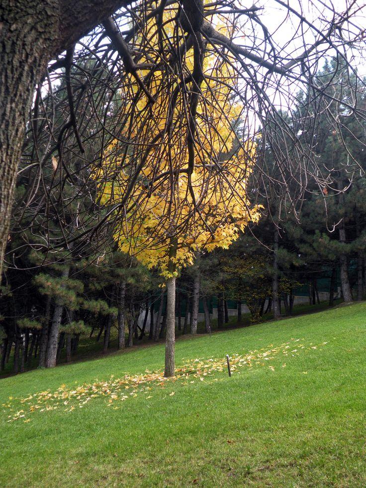 Arabul Ankara » Dijital Ankara » Seymenler Parkı'nda Bir Sonbahar