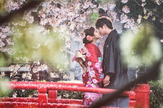 [prewedding] sakura rain | Flickr - Photo Sharing!