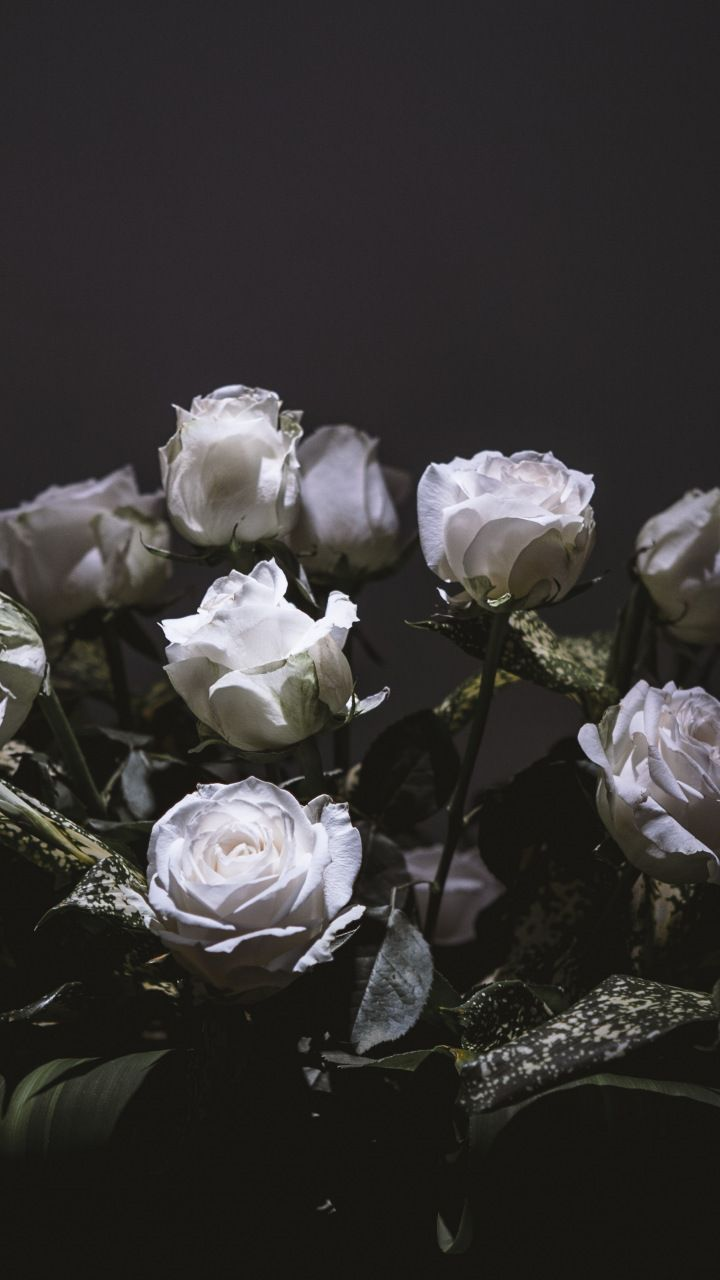 White Roses Bouquet Portrait 720x1280 Wallpaper White Roses Flowers White Roses Background