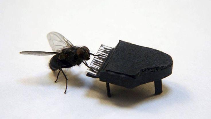 visit venus - magic fly (stellar jungle)