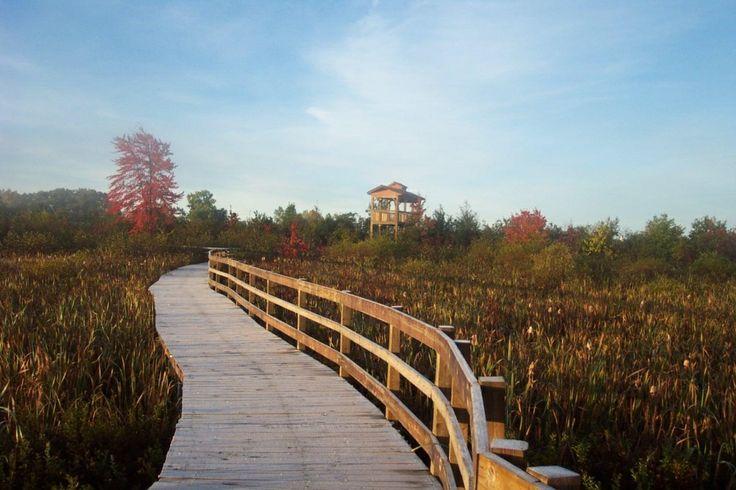 sentier pédestre au marais des cerises...........footpath at the cherry's marsh (Magog,Quebec,Canada)