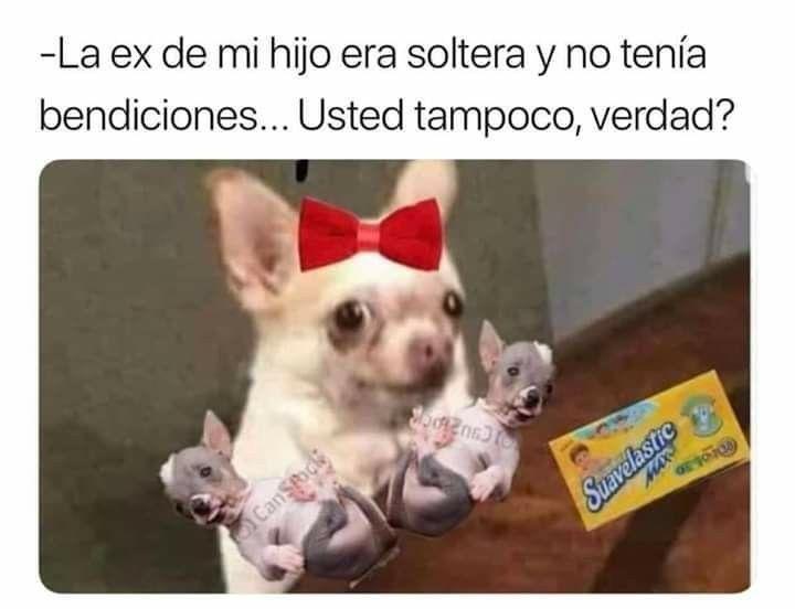 La Ex De Mi Hijo Animals Memes Dogs