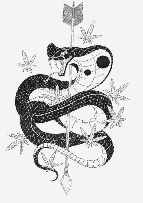Best 25+ Snake drawing ideas that you will like on Pinterest