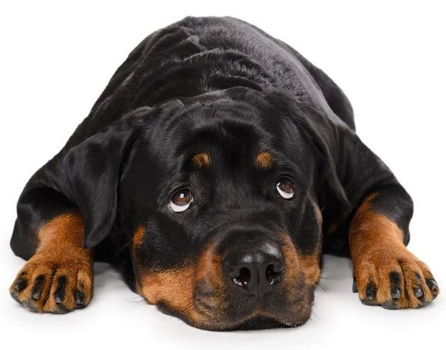 Confrontation; Why it is Never the Best Way to Train Your Dog