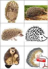 A trois on a moins froid - Jeu de cartes représentations des animaux