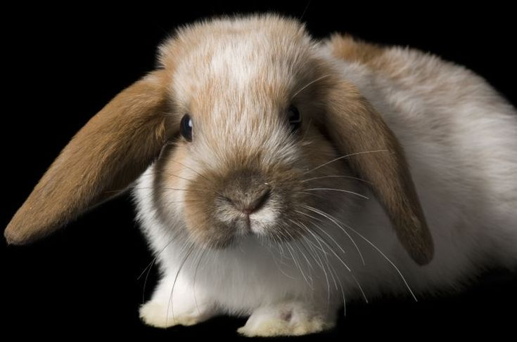 30 Best Bunny images