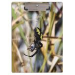 Black & Yellow Argiope Garden Spider Clipboard #halloween #happyhalloween #halloweenparty #halloweenmakeup #halloweencostume
