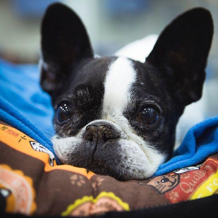 Cómo empezamos el año? Por aquí todo sigue su curso Estamos bien alerta para cualquier urgencia!  #hvvalenciasur #hospitalveterinario #veterinaryhospital #veterinario #veterinary #veterinarios24h #urgenciasveterinarias #veterinaryemergency #vet #pet #petstagram #petscare #animals #animalslover #instapet #instapets #petlover #veterinarian