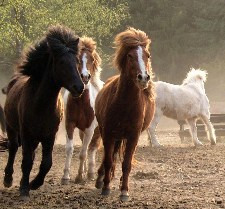 Jungpferdeaufzucht- alles für die Pferde auf dem Gestüt Nahetal