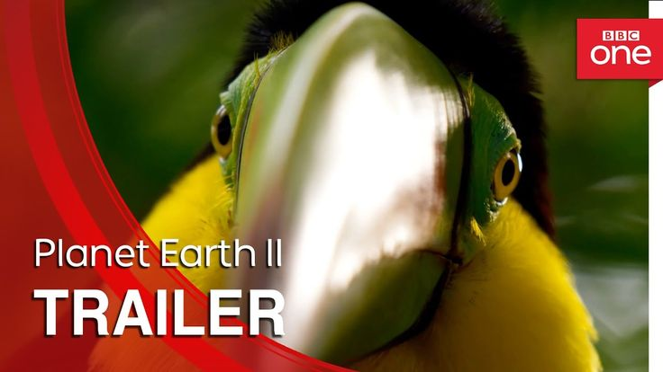 Planet Earth II, A Sequel to the Acclaimed BBC Documentary Narrated by David Attenborough