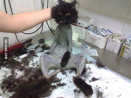 Just shaved pussy