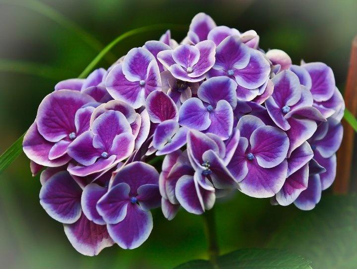 Beauty from http://www.facebook.com/HenryStradfordPhotography