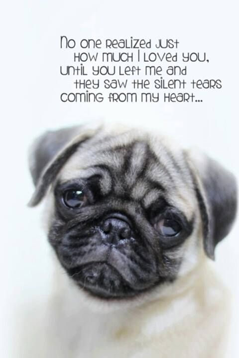 The pug is having such a hard time without you too.  How can I console him when I am barely holding on myself?  We miss you so much....it hurts.