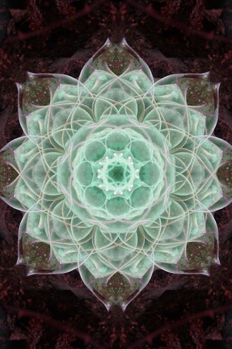 .: Soft Colors, Sacred Geometry Art, Gardens Art, Aqua, Geometry Sacred Geometry, Fractals, Geometry Awesome, Flower, Mandalas In Nature