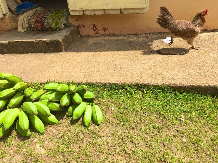 Local life in Samana, Dominican Republic.