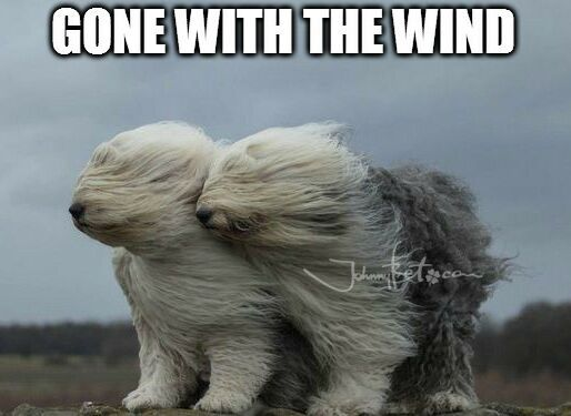https://es.johnnybet.com/codigo-promocional-premier-casino-3?fancy=1#picture?id=10193 #dogs #wind #animal #nature #funnypics