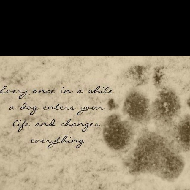 Fellow dog lovers will understand completely when you share one of these quotes about your beloved friend that has passed on. Description from hiscram.com. I searched for this on bing.com/images