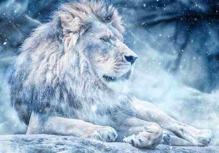 Singa Sebagai Simbol Kekuatan, Kekuasaan & Keganasan Fakta singa dengan kekuatan tubuh dan kecepatan untuk menerkam mangsa,telah selamanya menjadi simbol kekuatan, kekuasaan dan keganasan.  Jika Anda memiliki kesempatan untuk melihatnya di kebun binatang atau taman safari terbuka, melihat spesies yang besar ini dari dekat, pasti akan menjadi merinding.   10 Fakta Singa  10. Singa Afrika adalah kucing paling bersosial dari