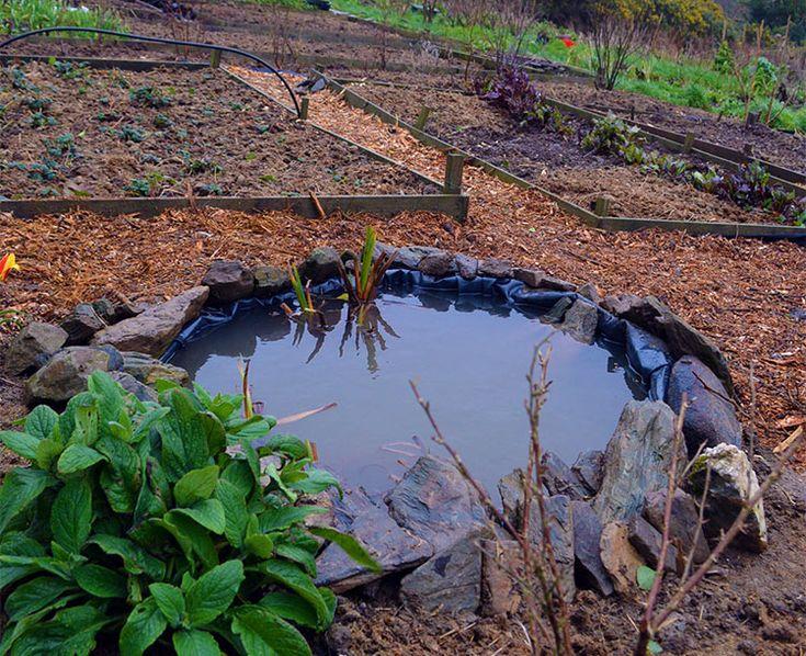 17 best images about moestuin on pinterest gardens raised beds and vegetable garden - Build pond wildlife haven ...