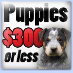 Under $300 | Lancaster Puppies
