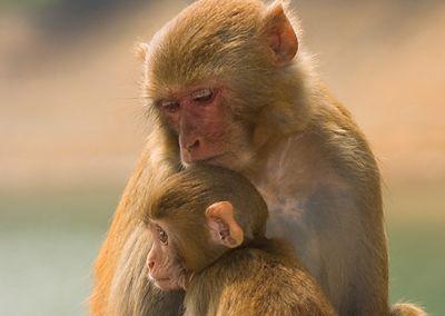 Monkey #baby #postcards