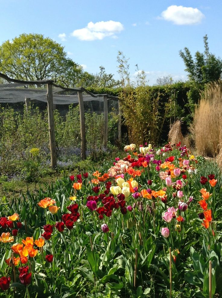 A riot of colours! Tulips in the Vegetable Garden, Great Dixter - Photo by Noemi Mercurelli