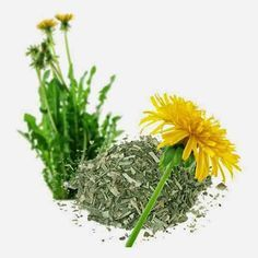 <p>Este chá mistura duas ervas que têmacçãoanti-inflamatóriae ajudam a tratar problemas de pele, como acne, eczema e psoríase. Ele estimula os rins e o fígado a liberar toxinas. É um chá perfeito para quem quer se desintoxicar. Antes da receita, vamos falar resumidamente dos ingredientes. A bardana, também conhecida como …</p>