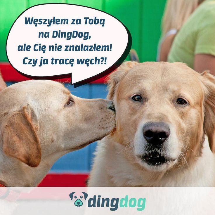 A Ciebie i Twojego psa można znaleźć na DingDog? #DingDog #DogLovers #walk #spacer #pies #app