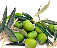 www.oleoalmanzora.comAceite de Oliva Virgen Extra Gourmet Oleoalmanzora Arbequina catame aove evoo premium alta gama, pulpi, almería extra virgin olive oil