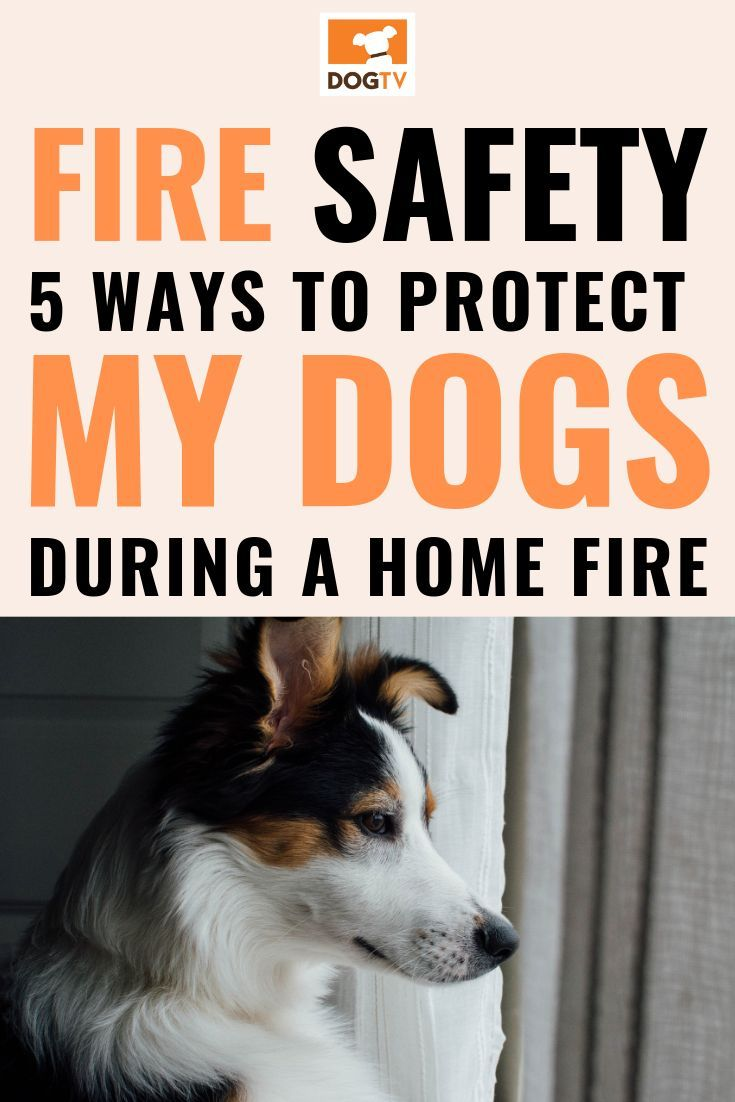 5 Ways To Protect Pets From Home Fires With Images Dog