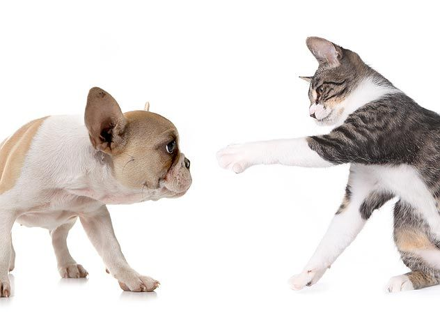 "Does your dog, well, ""dog"" your cats? Give your cats some peace of mind and body with these tips for stopping cat-chasers in their tracks."