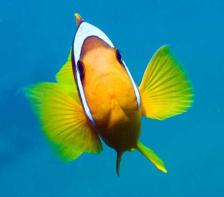 Che bello quest' incontro!  #diving #sub #subacquea #MarRosso