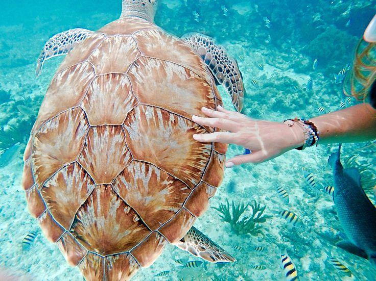 Summer #turtle #tumblr