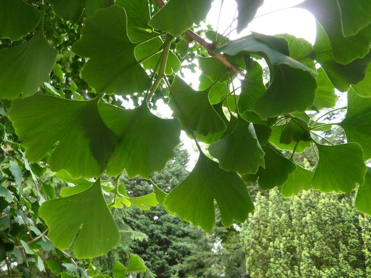 Foto's / Fotogalerijen Pinetum Blijdenstein: botanische tuin in Hilversum…