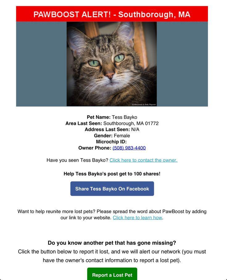 Lost Female Cat Named Tess Bayco: Southborough, MA