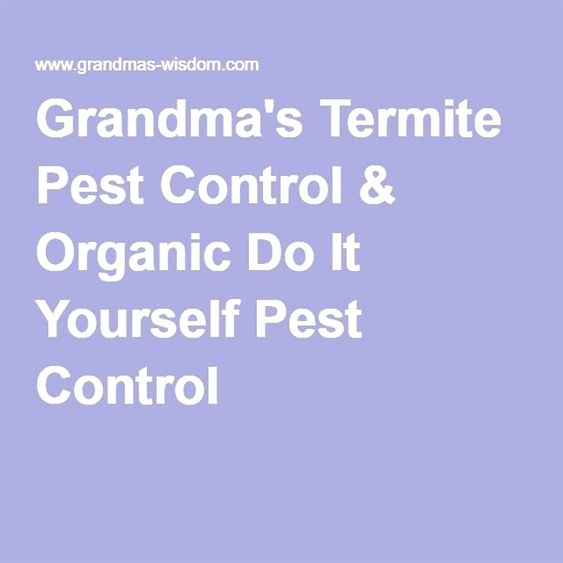 what all you need to know about pest control in 2020  with