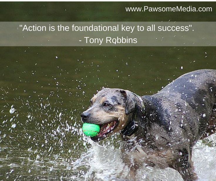 Action is key to success in business.