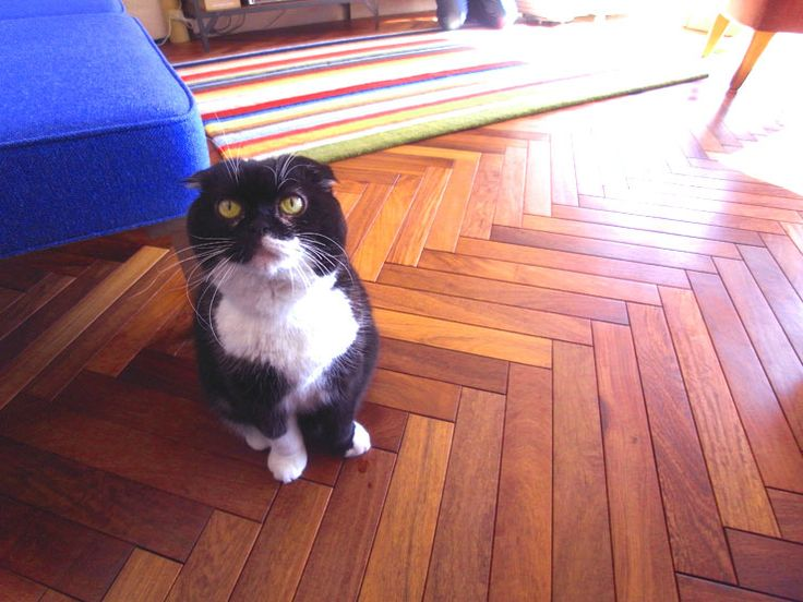 ■カリンヘリンボーンプレミアムフローリング (自然塗装、15x60x420mm) 神奈川県 個人住宅 施工写真 ~ジブリから出てきたような猫さんです。