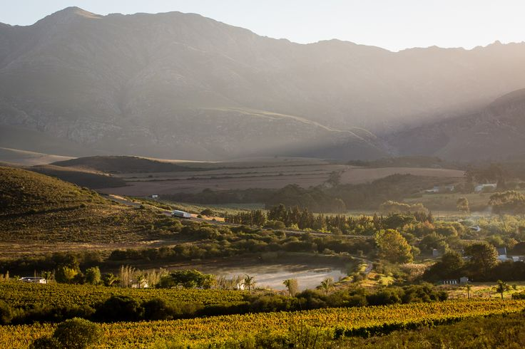 The beauty of our working farm is truly something to behold. Visit us - just off the N2 on the R60 to Swellendam.