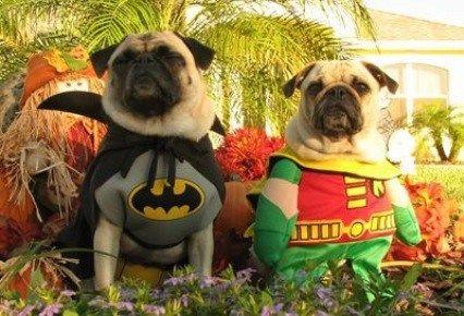 Disfraces para Mascotas en Halloween - Disfraz de Batman y Robin para bulldogs