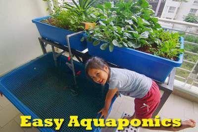 Some Considerations On Creating An Easy Aquaponics diyaquaponicsplan...