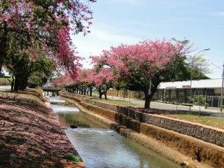 Outono na minha cidade - Campo Grande, Mato Grosso do Sul - Brasil!!!