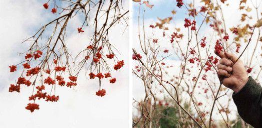 [ Baró ] » Album: coletiva de fotografia contemporânea