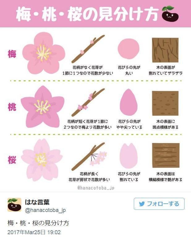 #桜 #桃 #梅 #見分け方 (Via: 梅・桃・桜の見分け方「花びらの先端が割れているのが桜」 ) 桃の花をあんまり見ることがないかも^^;。 園芸、ガーデニングのお供にヤシマットをどうぞ。