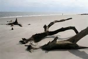 Driftwood the Beach - Saferbrowser Yahoo Image Search Results